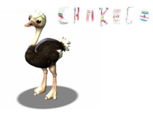 avestruz de chokoco